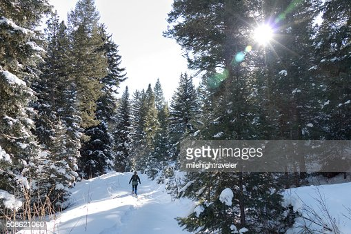 Winter snowshoeing snowy Evergreen pine forest mountain trail Colorado : Stock Photo