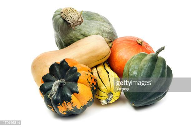 Winter Squash Gourd Family, Still Life Isolated on White Background