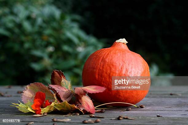 winter squash on a garden table with autumn leaves and Indian cress flower