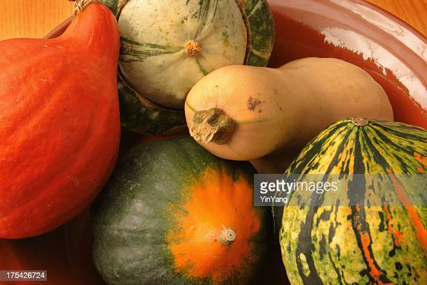 Winter Squash Vegetable Variety—Acorn, Butternut, and Other Autumn Food