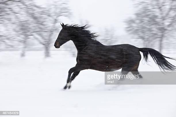 Winter Storm Horse