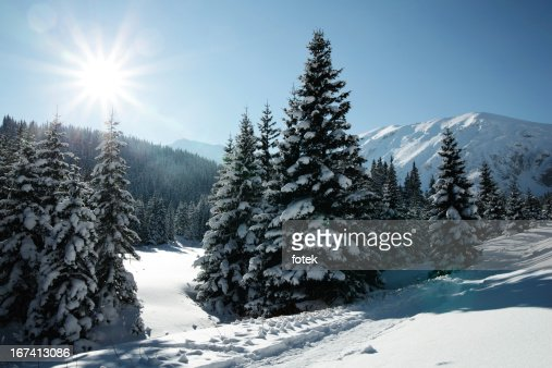 Winter sun : Stock Photo