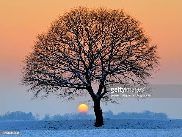 Winter sunset with silhouette of tree