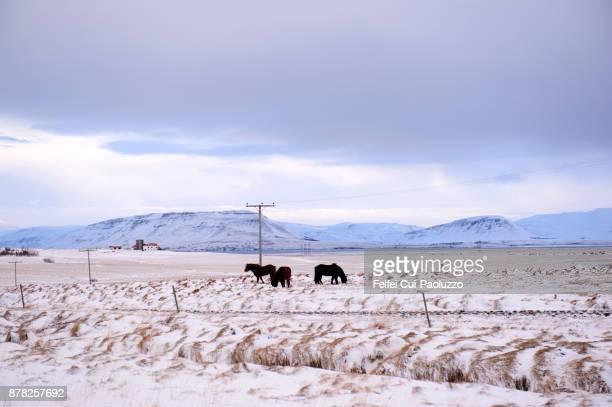 Winter tiem at Borgarnes, West Iceland