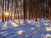 Ottawa Green Belt trail in winter at sunrise