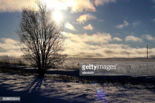 Winter tree in a field : Stock Photo