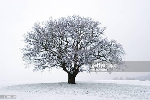 Arbre d'hiver dans la neige