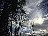 Winter trees, clouds and sunbeams