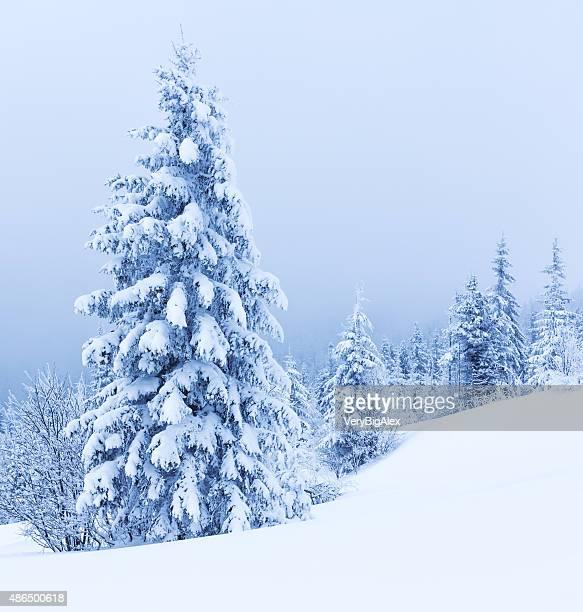 Arbres d'hiver dans les montagnes couvertes de neige