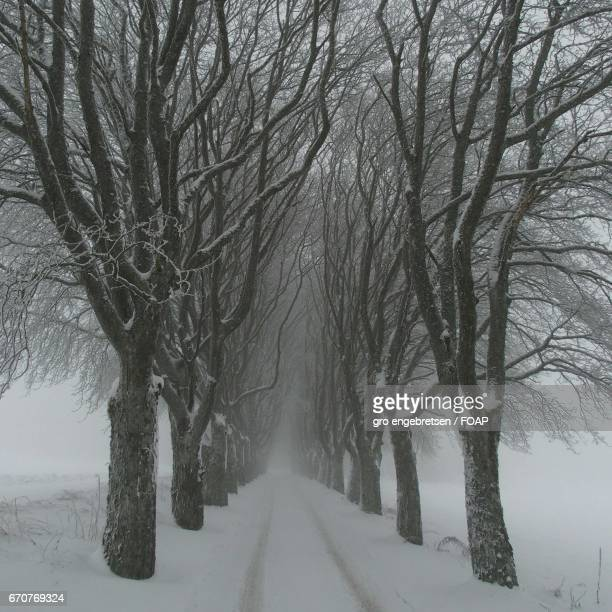 Winter trees in the fog