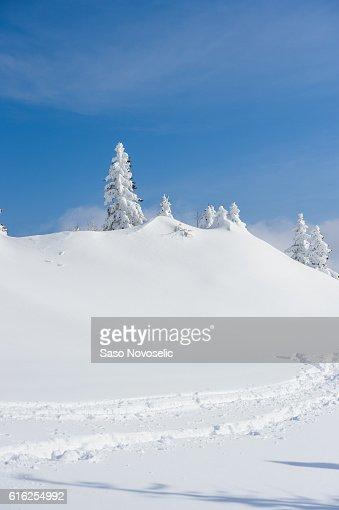 Winter Trees : Stock Photo