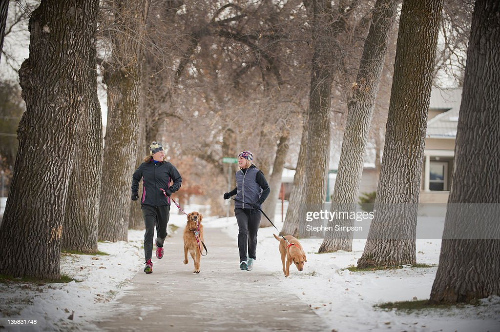 Winter, two women out for a run with their dogs : Stock Photo