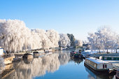Winter willow tree at the riverside, Great Ouse river, Cambridgeshire, Ely
