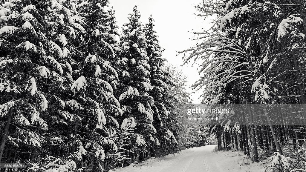 Winter Wonderland : Stock Photo