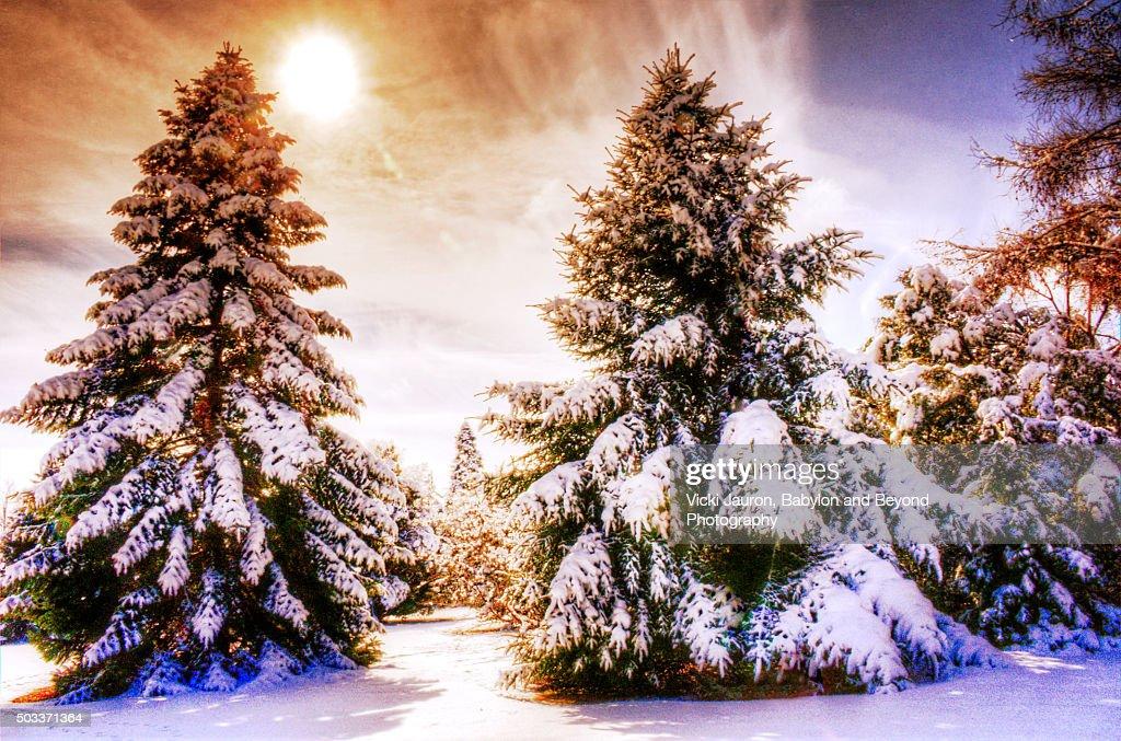 Winter Wonderland Scene at Bayard Cutting Arboretum in Oakdale, Long Island