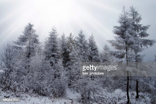 Madeira de Inverno : Foto de stock