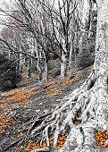 Winter Woodderland