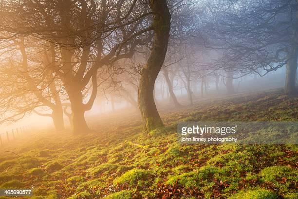 Winter Woodland sunrise, Peak District.