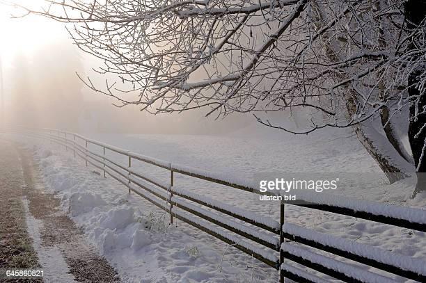 Winterlicher Landweg an einer Koppel mit bereiften Baeumen im Morgennebel