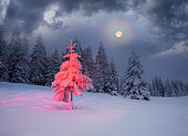 Frosty winter night of Christening - magic light fairy lights on a snowy background in Alpine spruces forest after a snowstorm in the rugged mountains of Europe during the moon fairy