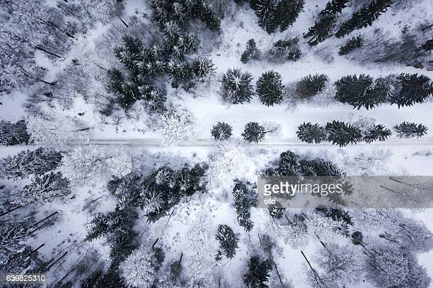 Wintery forest - aerial view