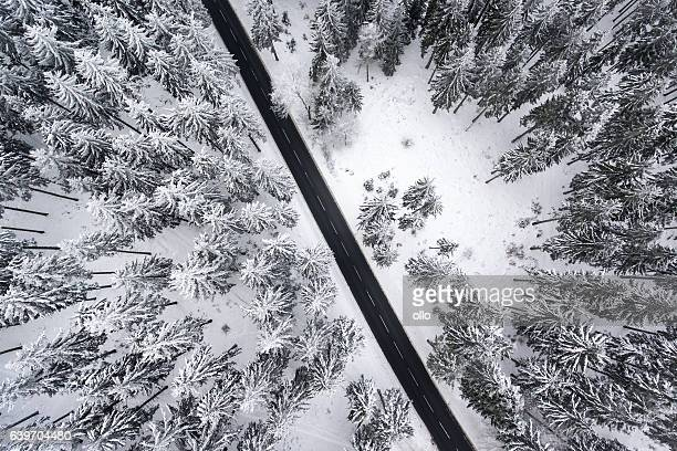 Wintery road through the forest - hoar frost