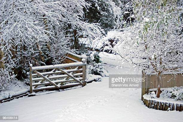 Wintery scene of a snow covered gate