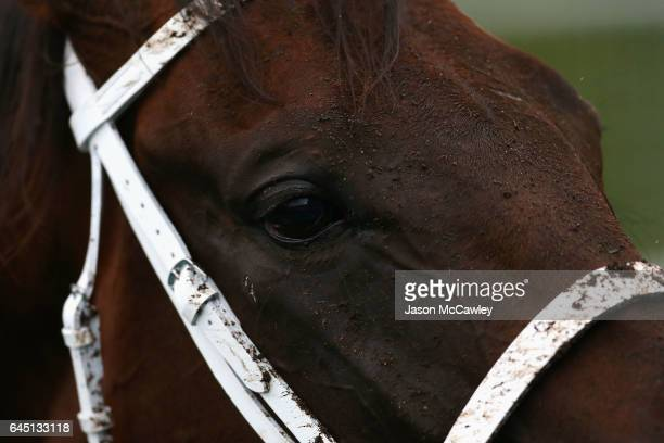 Winx after winning the Chipping Norton Stakes at Royal Randwick Racecourse on February 25 2017 in Sydney Australia