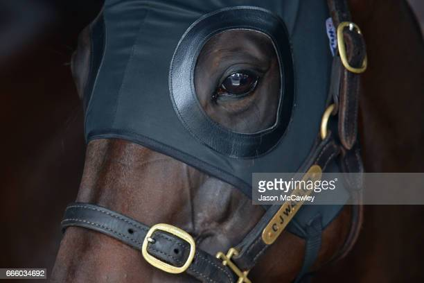 'Winx' during The Championships Day 2 Queen Elizabeth Stakes Day at Royal Randwick Racecourse on April 8 2017 in Sydney Australia