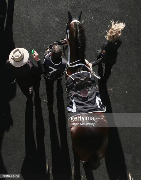 Winx enters the Theatre of the Horse prior to the Warwick Stakes during Sydney Racing at Royal Randwick Racecourse on August 19 2017 in Sydney...