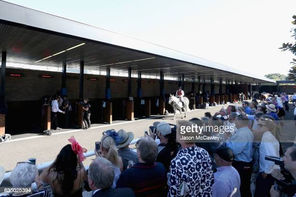 Winx is prepared in the stables prior to the Apollo Stakes at Royal Randwick Racecourse on February 13 2017 in Sydney Australia