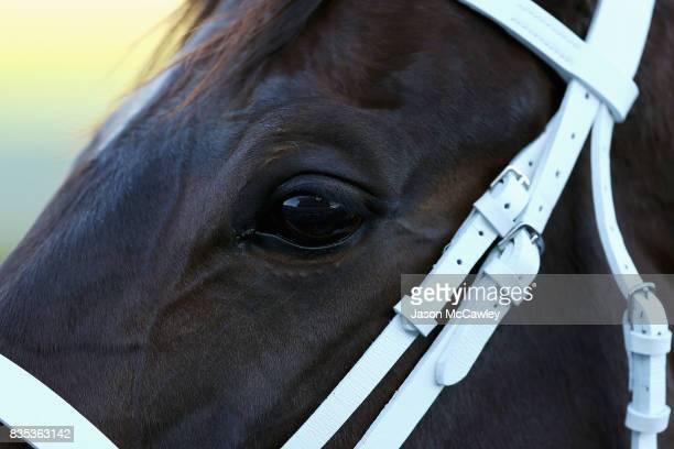 Winx makes her way to the start prior to the Warwick Stakes during Sydney Racing at Royal Randwick Racecourse on August 19 2017 in Sydney Australia