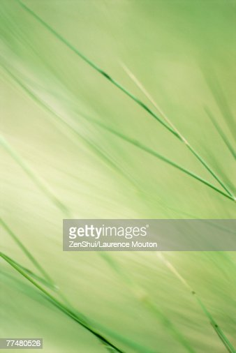 Wispy stems, green background