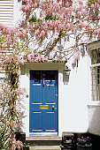 Wisteria climbing up the wall of a house with blue door, Rye, England