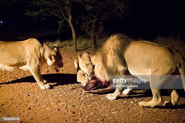 With Paul And Luana Belmondo In Namibia Paul BELMONDO et son épouse Luana à la découverte de la Namibie à bord du SUV Skoda Yeti 20 TDI 4 x4 vue de...