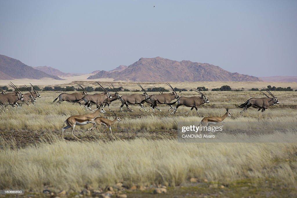 With Paul And Luana Belmondo In Namibia. Paul BELMONDO et son épouse Luana à la découverte de la Namibie à bord du SUV Skoda Yeti 2.0 TDI 4 x4 : troupeaux d'oryx et de springboks.
