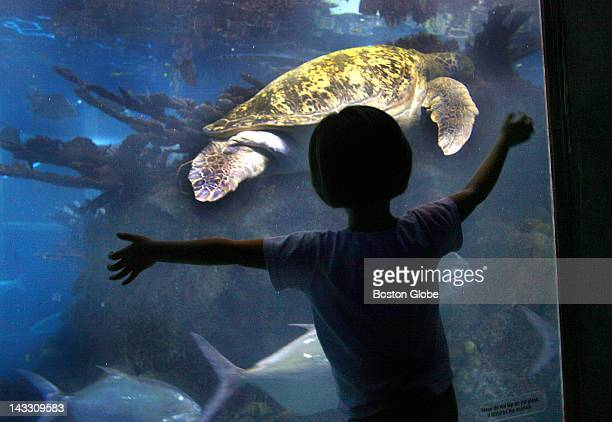With school children on vacation this week the New England Aquarium typically experiences one of its busiest times of the year Nicoletta Coupe from...