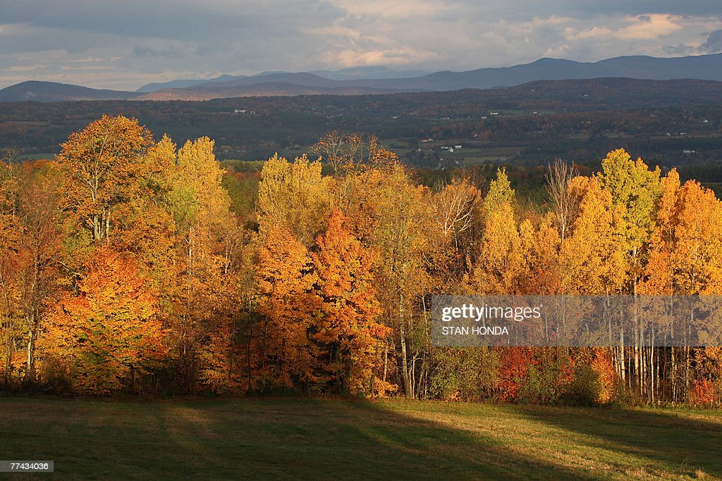 With the Green Mountains in the background the rising sun illuminates a stand of trees as leaves show their fall colors 20 October 2007 in this view...