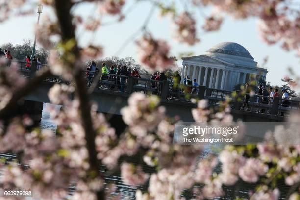 With the Jefferson Memorial in the background runners pass through the Tidal Basin during the Annual Cherry Blossom Ten Mile Run on April 2 2017 in...