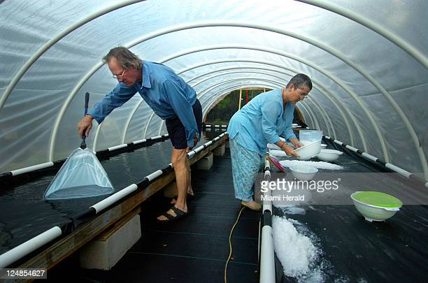 With the sun and the love of salt Midge Jolly right and Tom Weyant work in Salt House number four at Florida Keys Sea Salt farm in the lower Florida...