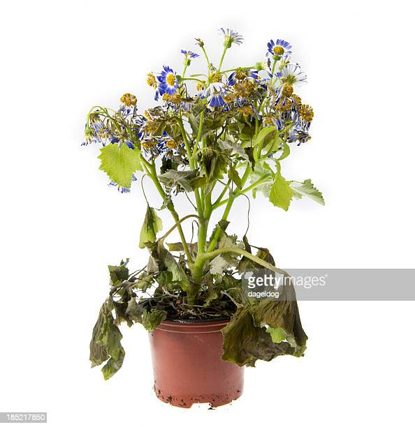 Ugly Flower Stock Photos And Pictures