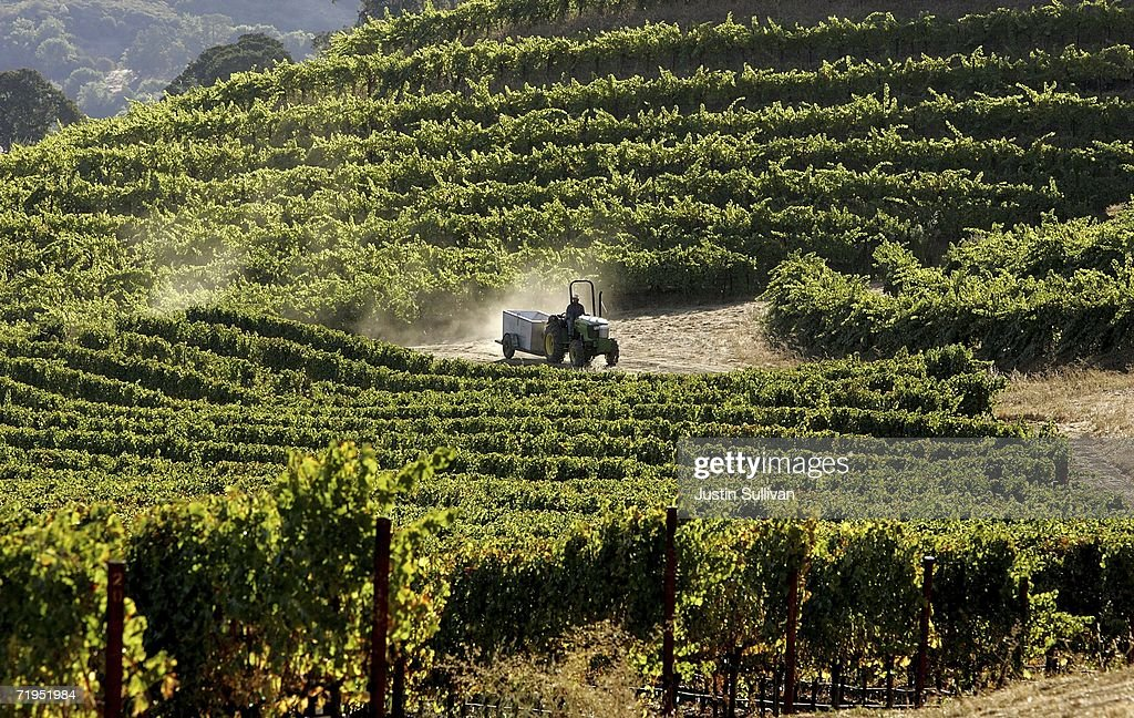 A woker drives a tractor through the vineyard at St Supery Winery September 20 2006 in Rutherford California Wineries in the Napa Valley region are...