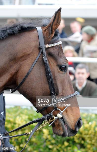 Wolf Moon in the parade ring at Kempton Park racecourse London