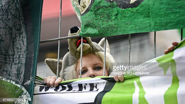 A Wolfsburg fan is pictured during the German first division Bundesliga football match between 1 FC Cologne and VfL Wolfsburg at the...