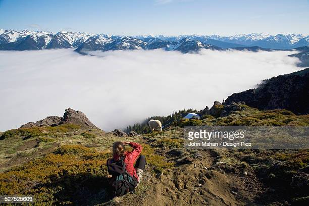 Woman above fog bank photographing mountain goat (Oreamnos americanus) with Olympic Mountains in the background