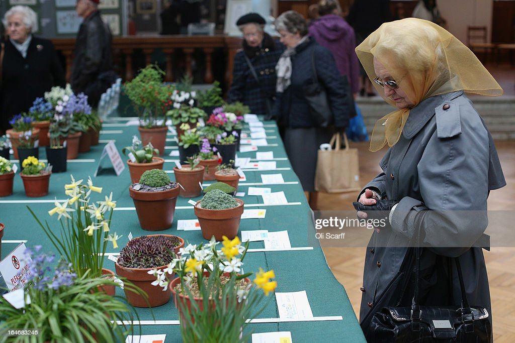 A woman admires the plants on display at the RHS Great London Plant Fair on March 26, 2013 in London, England. The fair takes place in the RHS Horticultural Halls on March 26-27, 2013 and features numerous botanical displays, advice from the RHS, Alpine Garden Society stalls and the results of the 'Early Daffodil and Hyacinth Competition'.