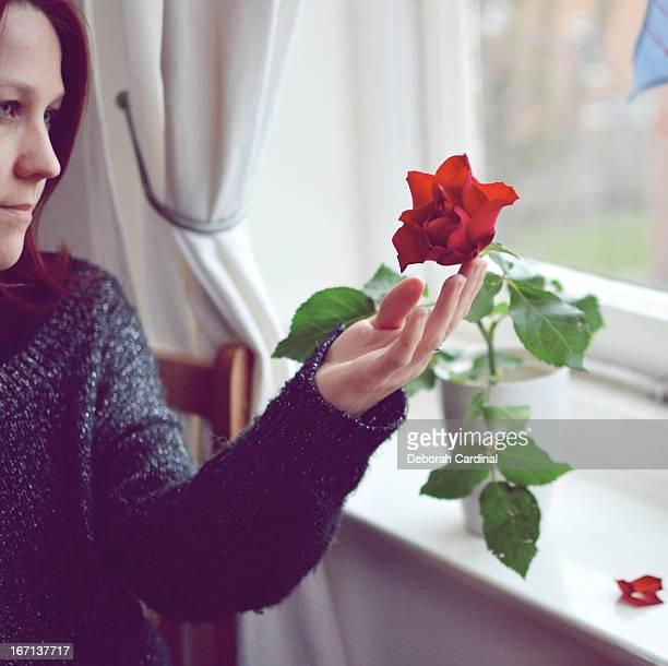 Woman admiring red rose in vase