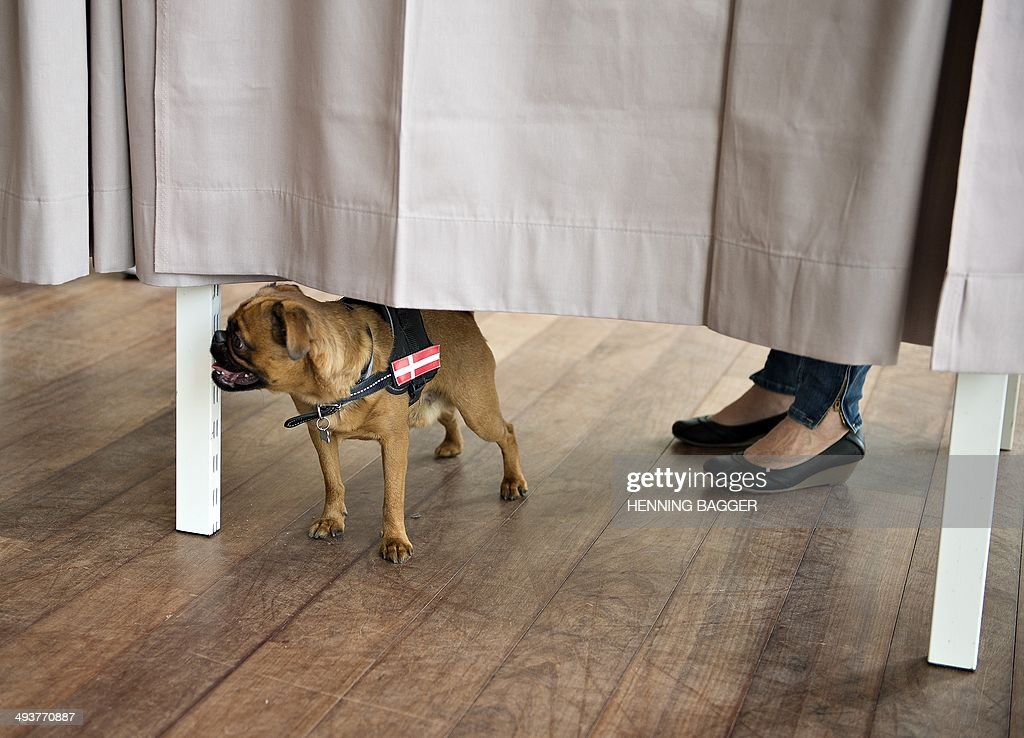 A woman (hidden) and a dog stand behind a curtain in a polling booth during the European Parliament election in Copenhagen, Denmark on May 25, 2014. AFP PHOTO / SCANPIX DENMARK / HENNING BAGGER +++ DENMARK OUT++