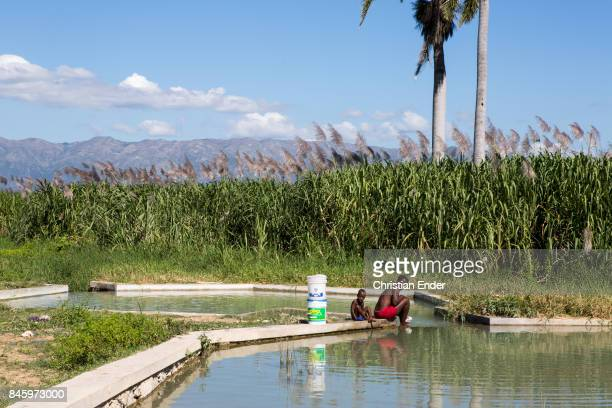 PortauPrince Haiti December 09 2012 A woman and a small boy are doing their laundry in a water basin near PortauPrince Palm trees reeds and mountains...