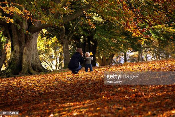 A woman and child look at trees showing their autumn colours on November 1 2011 in Bath England According to a number of nature watchers the autumn...